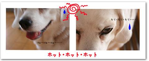 4_20100819135859.jpg