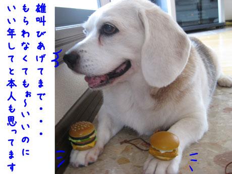 4_20100903225657.jpg