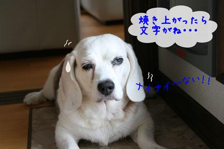 4_20100913152241.jpg