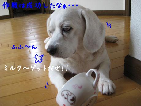 4_20100921144625.jpg