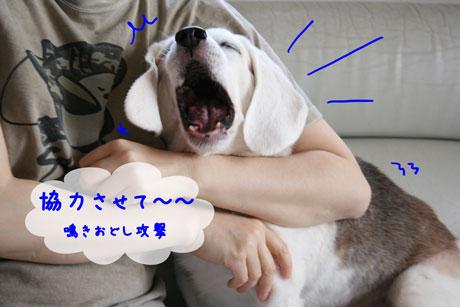 4_20100925134116.jpg