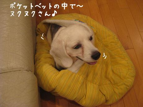 4_20101004134601.jpg
