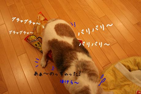4_20101013110118.jpg
