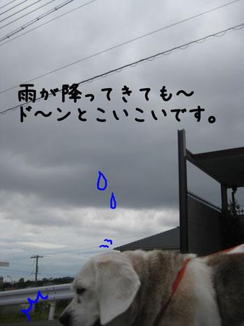 4_20101030145731.jpg