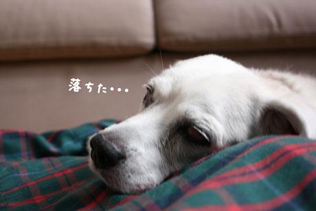 4_20101101132638.jpg