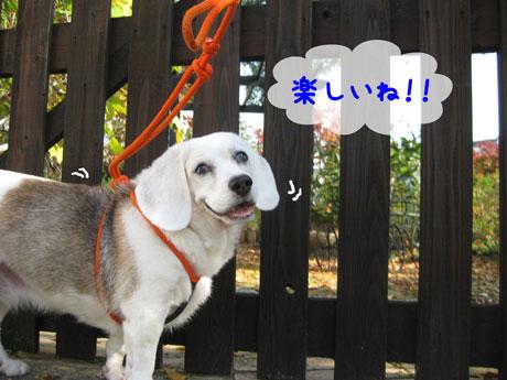 4_20101108152048.jpg