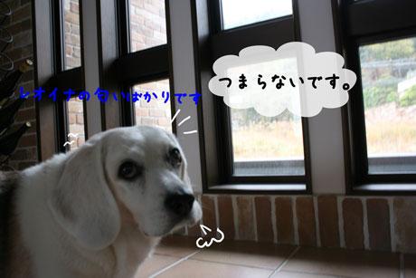 4_20101122115447.jpg