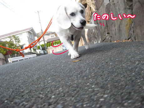 4_20101126145212.jpg