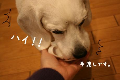 4_20101203200100.jpg