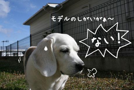 4_20101212121046.jpg