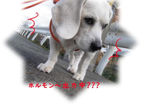 4_20101214142707.jpg