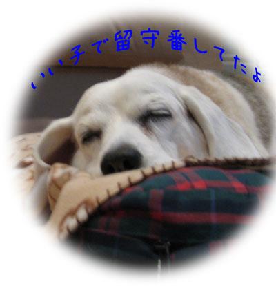 4_20101218174354.jpg