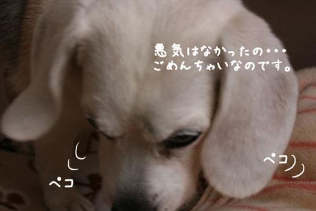 4_20101222005243.jpg