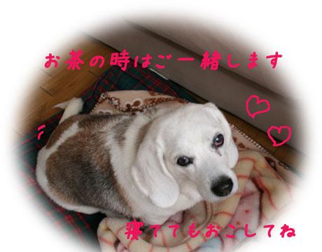 4_20101225163938.jpg
