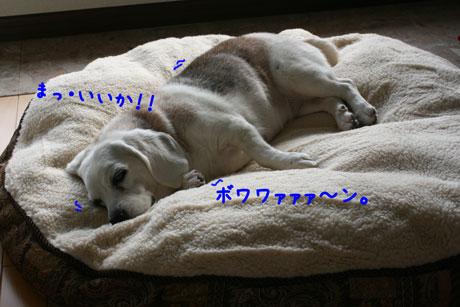 4_20101228154417.jpg