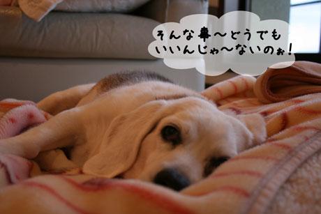 4_20110103171207.jpg