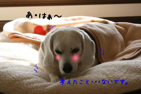 4_20110107115618.jpg
