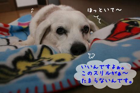 4_20110114114025.jpg