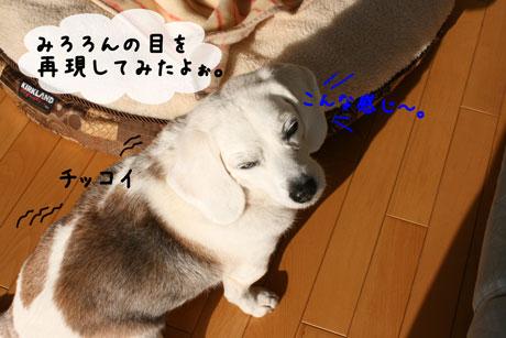 4_20110118100723.jpg