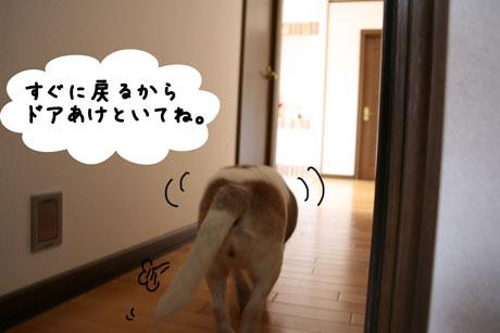 4_20110128170759.jpg