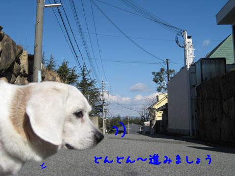 4_20110131161453.jpg