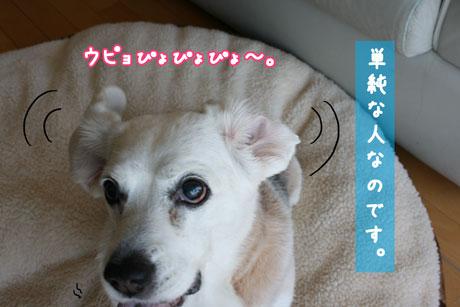 4_20110203154130.jpg