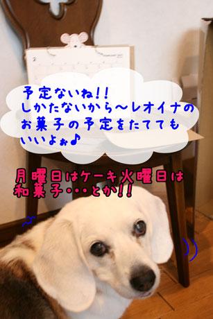 4_20110203172818.jpg