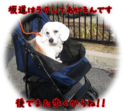 4_20110305163453.jpg