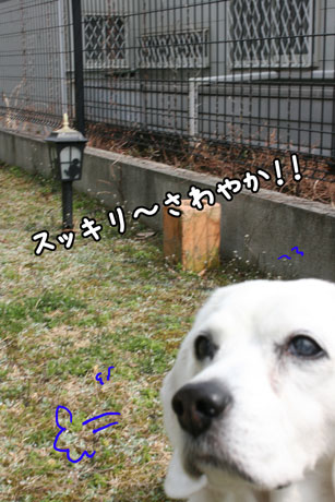 4_20110315144428.jpg