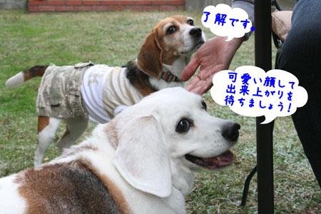 5_20091025151816.jpg