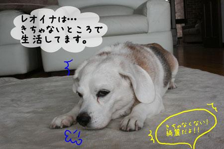 5_20091123120130.jpg