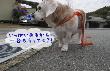 5_20091124140701.jpg