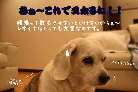 5_20091125115549.jpg