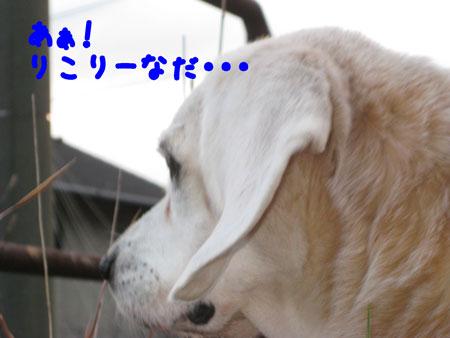 5_20091207165951.jpg