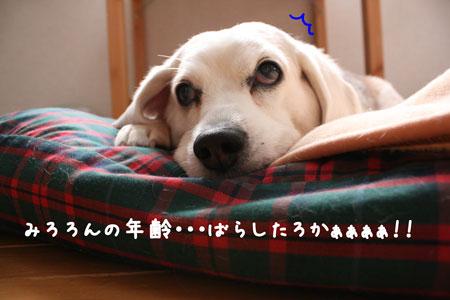 5_20091212135951.jpg