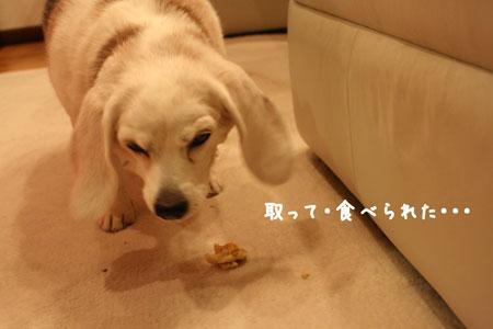 5_20100105211633.jpg