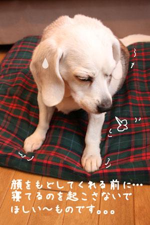 5_20100125131245.jpg