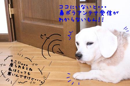 5_20100127122923.jpg