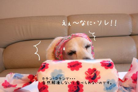 5_20100208171832.jpg