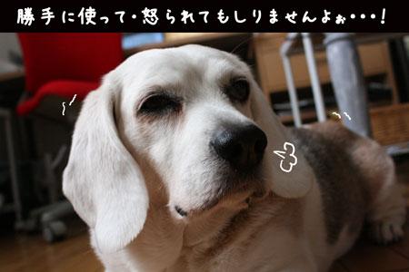 5_20100215172643.jpg