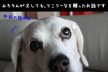 5_20100221175656.jpg
