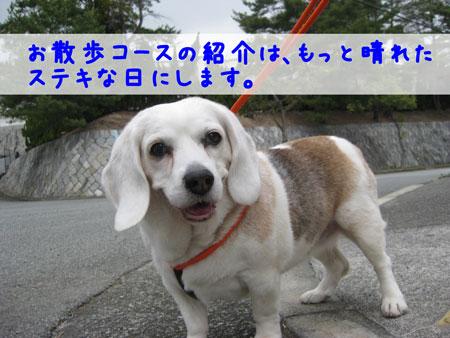 5_20100320171345.jpg