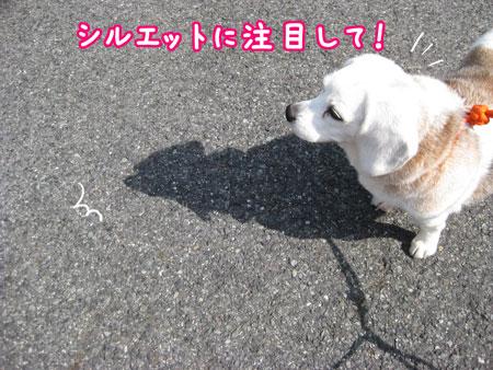 5_20100330170732.jpg