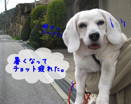 5_20100405164146.jpg