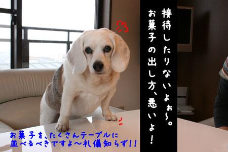 5_20100407160530.jpg