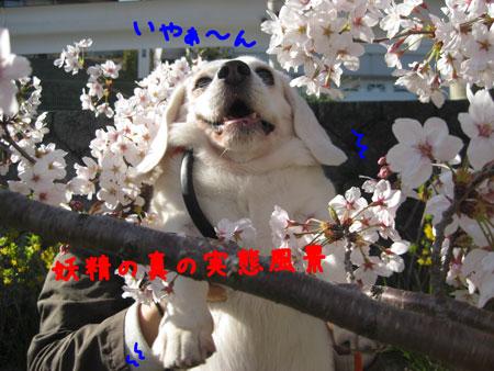 5_20100408174948.jpg