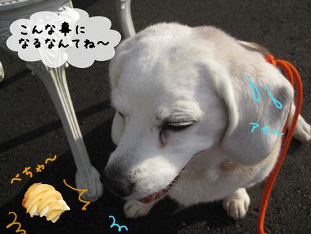 5_20100509143240.jpg