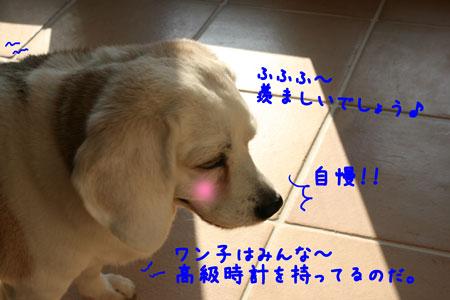 5_20100602180554.jpg