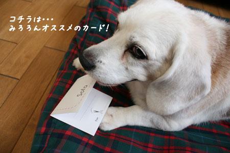 5_20100611171900.jpg