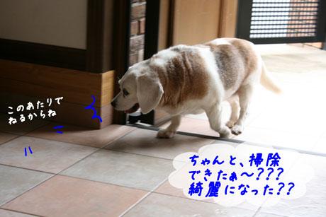 5_20100628163747.jpg